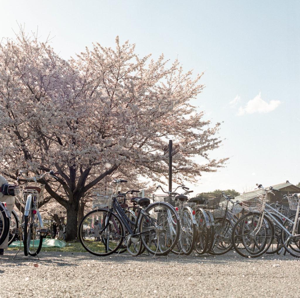 富士フィルム PRO400 静岡 駿府城公園