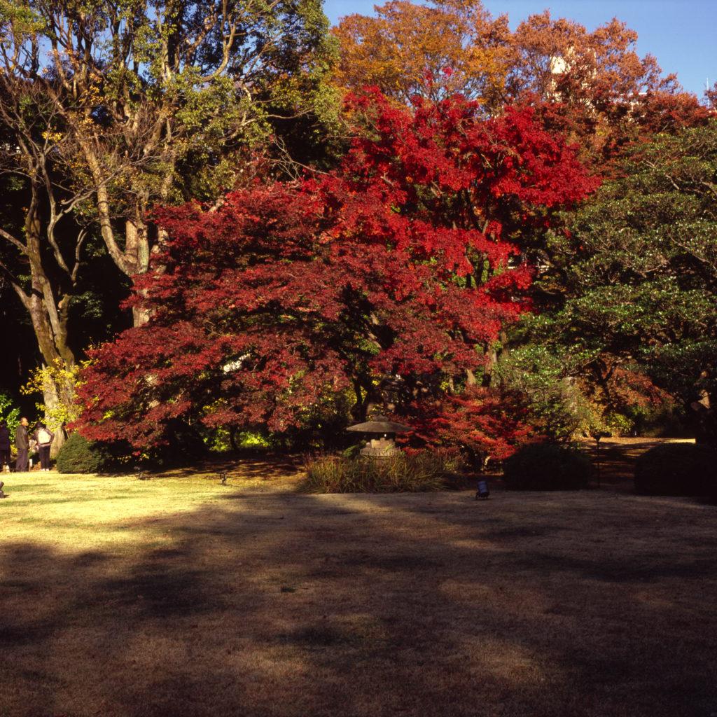 六義園 富士フィルムGF670