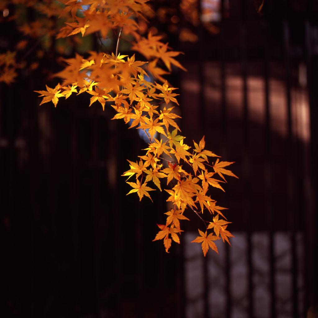高尾山 富士フィルムGF670 + Velvia100